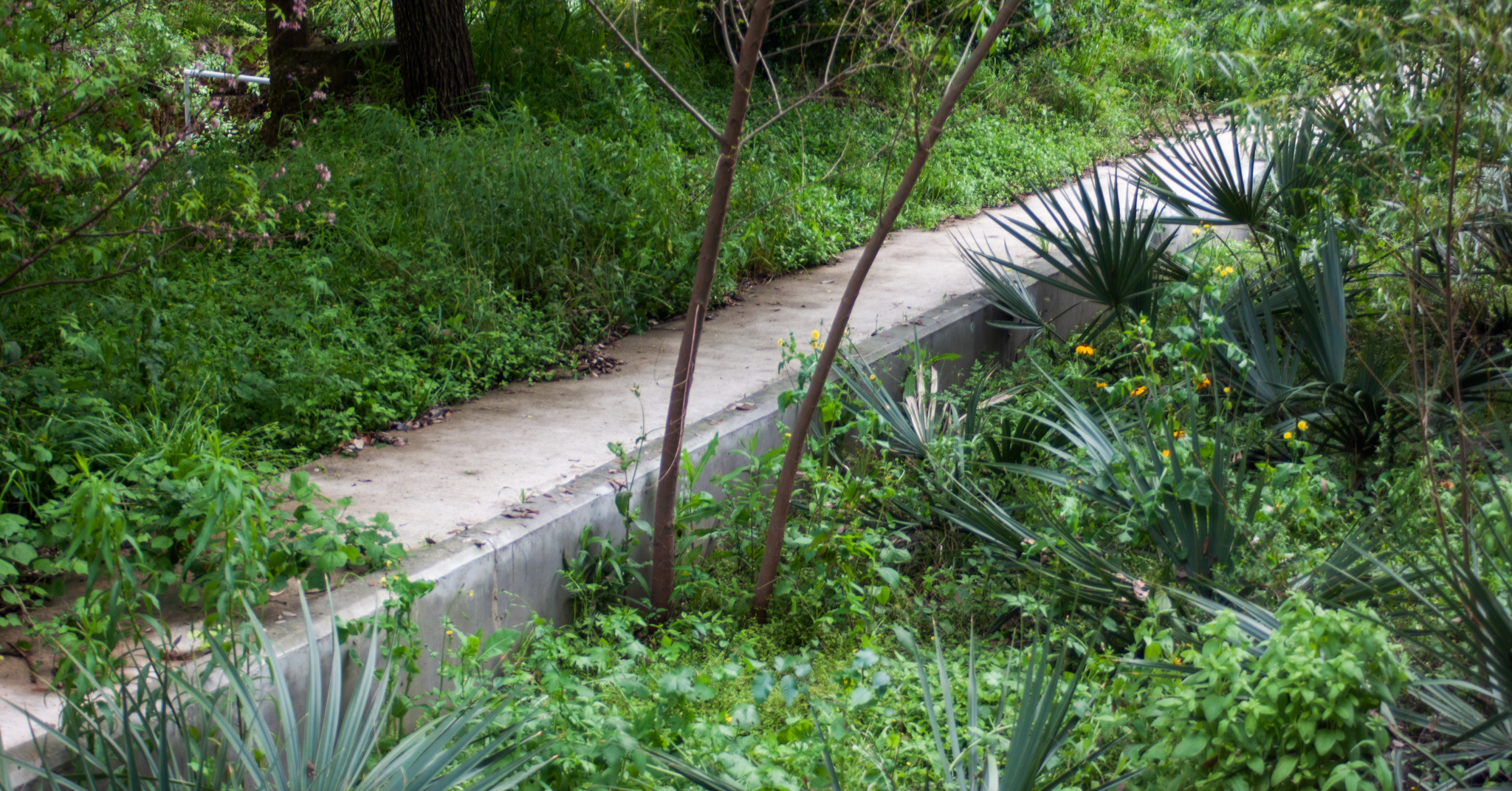 Bioretention pond