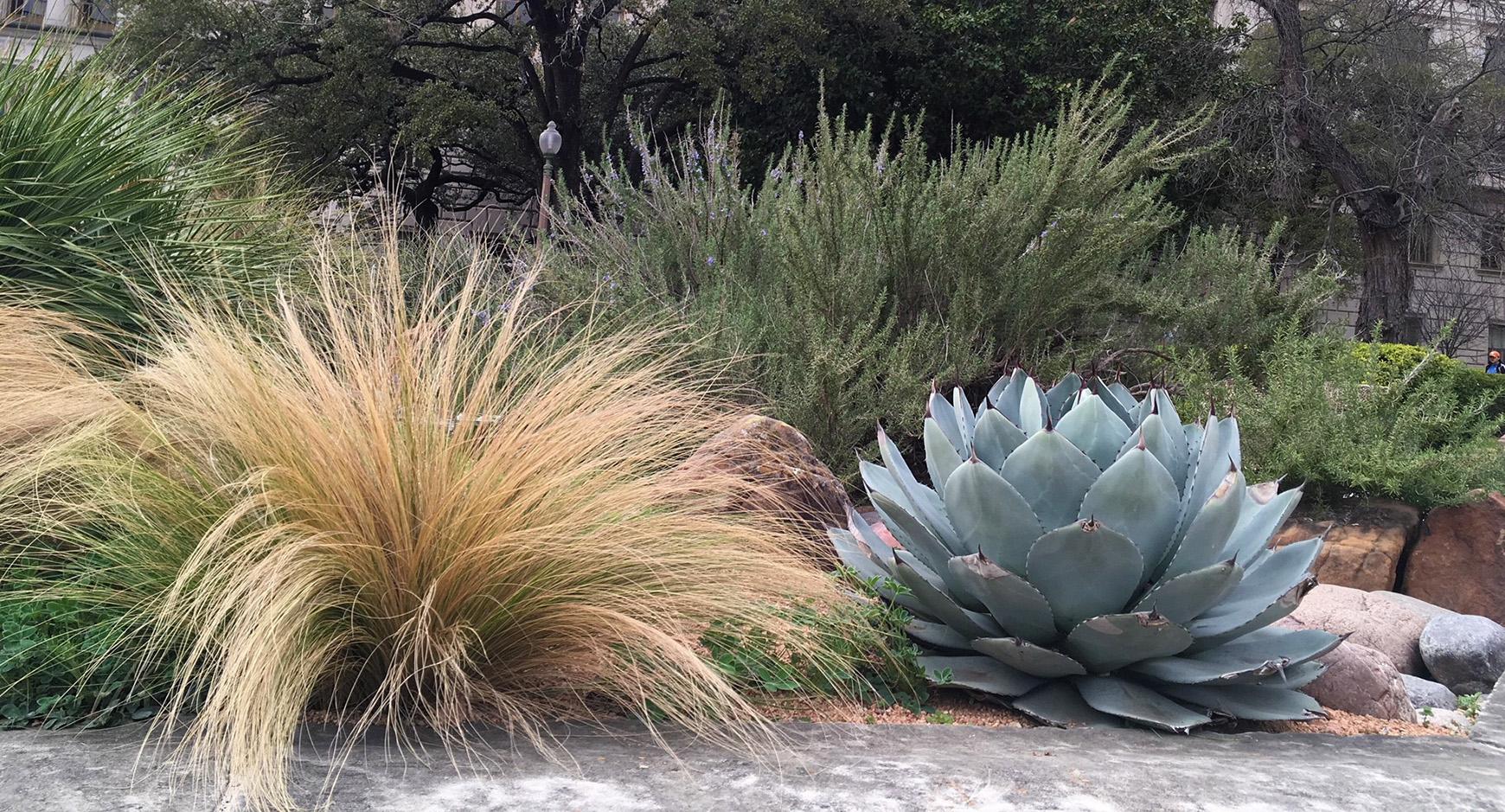 Native plants near UT tower
