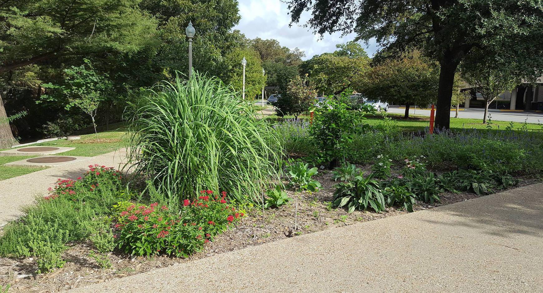UT Austin pollinator garden