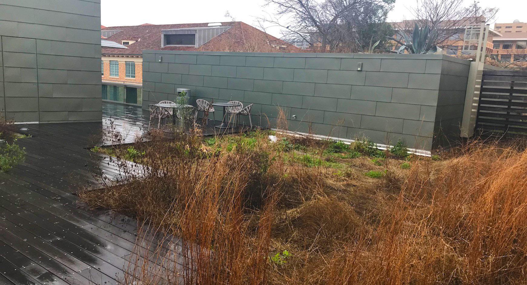 SAC roof garden in winter