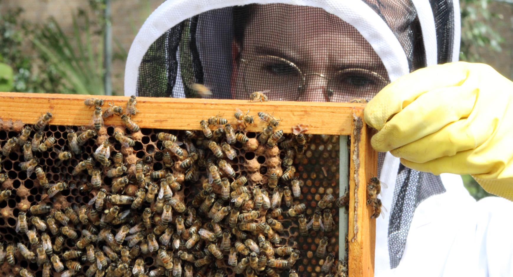Beevo Beekeeping Society, University of Texas at Austin