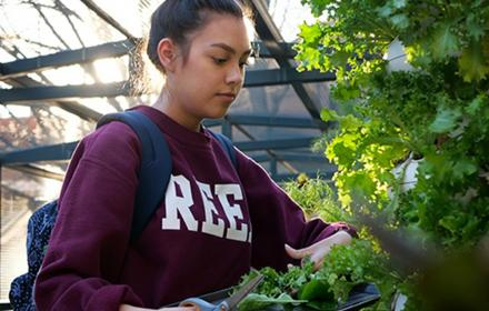 Picking your own greens on campus