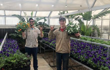 Greenhouses for growing landscaping plants
