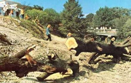 Waller Creek after trees felled south of 21st St in 1969